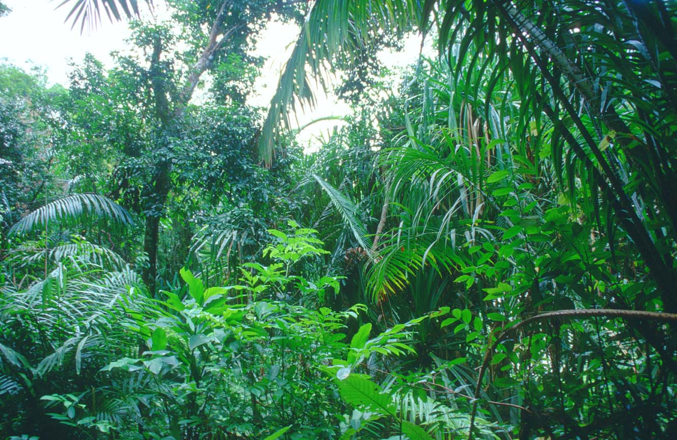 an introduction to tropical rain forests Running across the northern tip of south america is the world's second largest river, the amazon, whose river basin composes the majority of the amazon rainforest, the world's largest tropical .